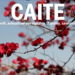 Caite