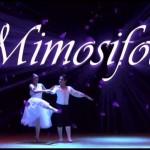 Mimosifolia Ballet Para Toda La Familia 3
